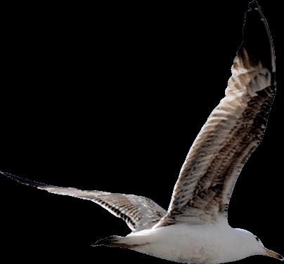 seagull left